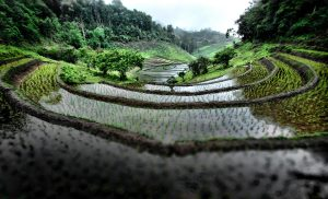 Rice-fields-and-terraces-in-the-mountains-of-northern-Thailand-copy