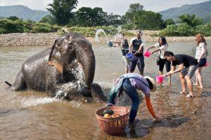 Thailand-Chiang-Mai-Elephant-Nature-Park2-L